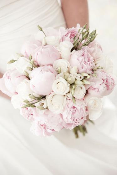 rosa-pioner_vita-rosor-och-vit-praerieklocka