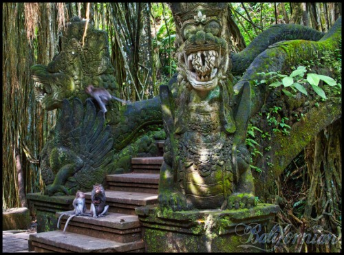 bali-wellness-monkey-forest-eat