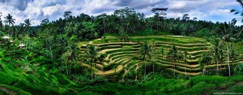 tegalalang-rice-terrace-ydc-bali-tour5