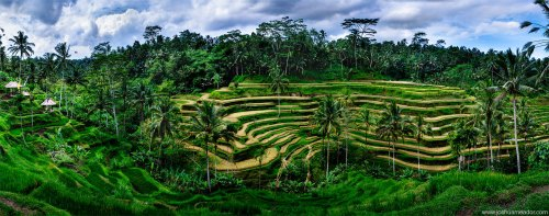 tegalalang-rice-terrace-ydc-bali-tour5
